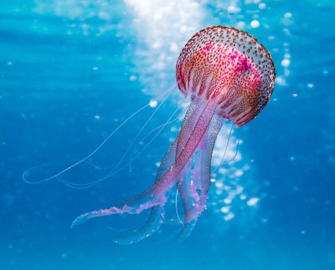 Evita el baño si hay señal de medusas
